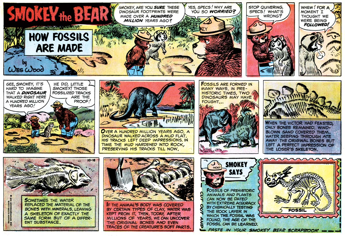 bear comic strip and book Barney