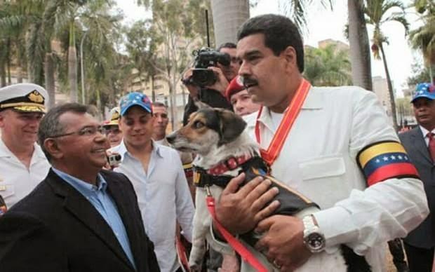 PRESIDENTE DE VENEZUELA NICOLAS MADURO CREA UNA MISION POR LOS ANIMALES
