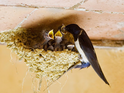 birds-family-wallpapers