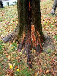 老木の根元