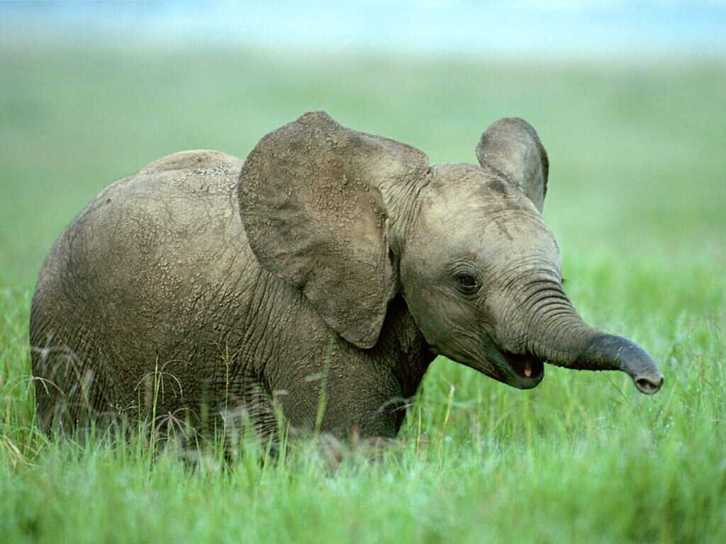 Elephant wallpaper pack 1 1024x768 cute girls - Baby elephant wallpaper ...