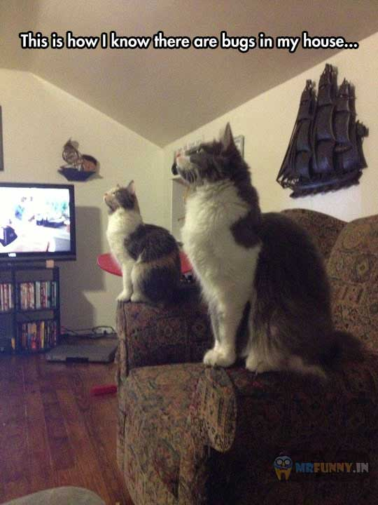 cool-cats-staring-roof-couch-funny-image