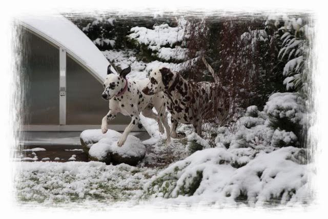 http://dalmatinerwelpen-haddonhall.blogspot.de/