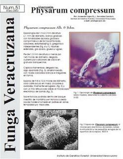 Physarum compressum