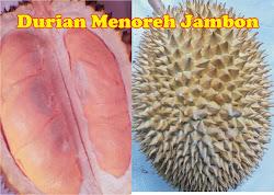 Buah Durian Menoreh Jambon
