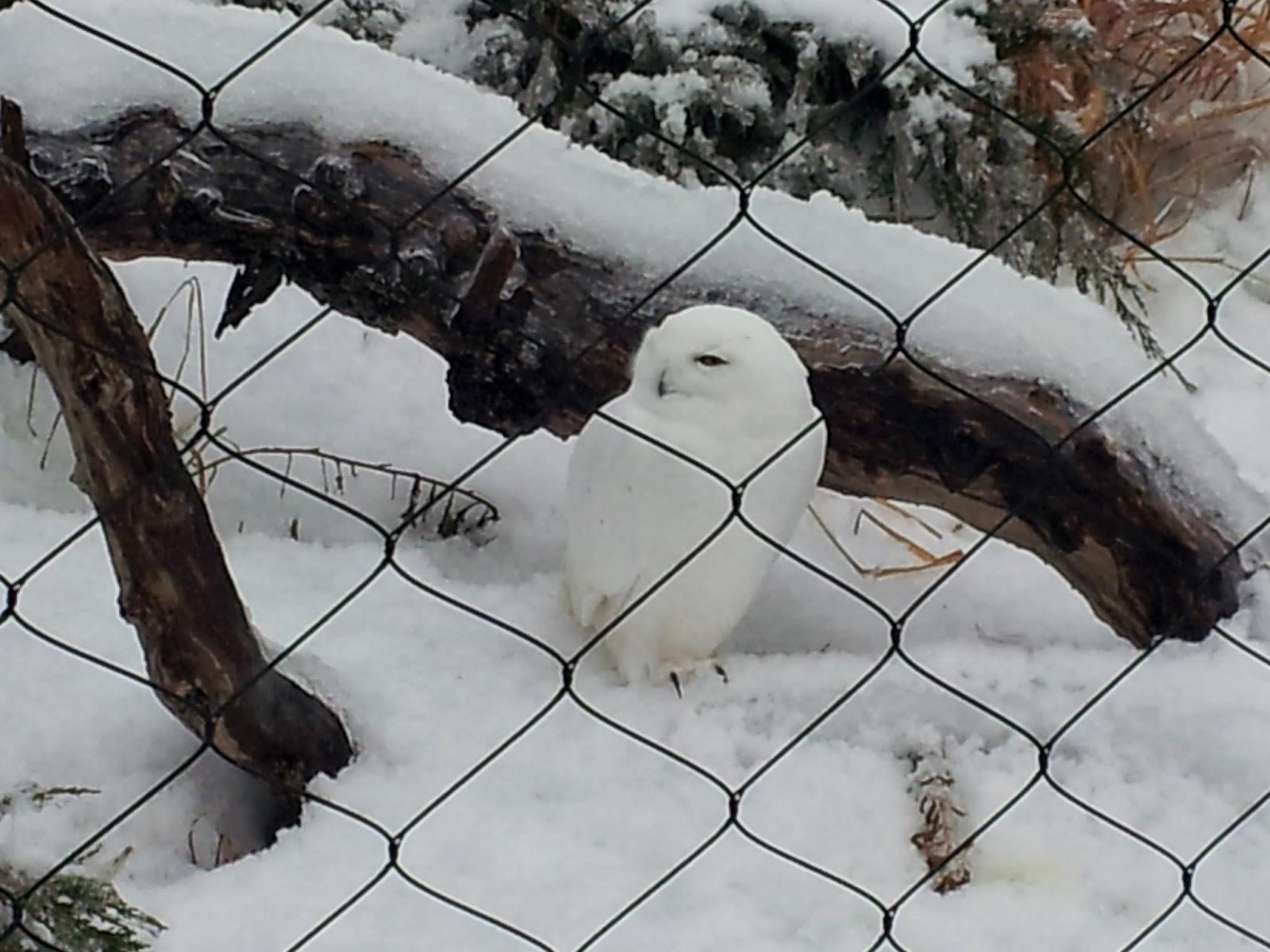 animals, zoo, winter, Canadian winter, animal photography