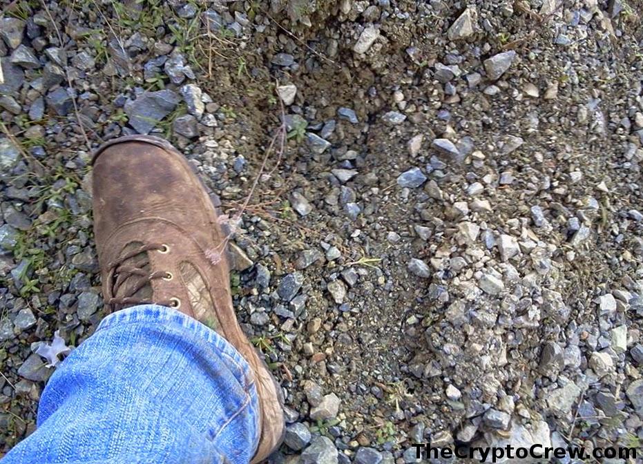 Possible Bigfoot Track