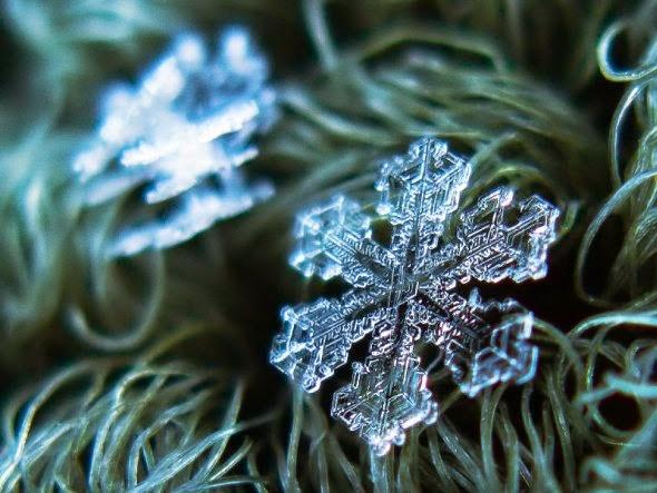 Alexey Kljatov fotografia macro natureza flocos de gelo