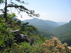 View Of Table Rock From Linville Gorge
