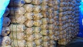 ก้อนเชื้อเห็ดราคาถูก บางบอน รัประกัน