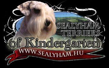 Sealyham Terrier  of  Kindergarten Bronzkoszorús Mestertenyészet