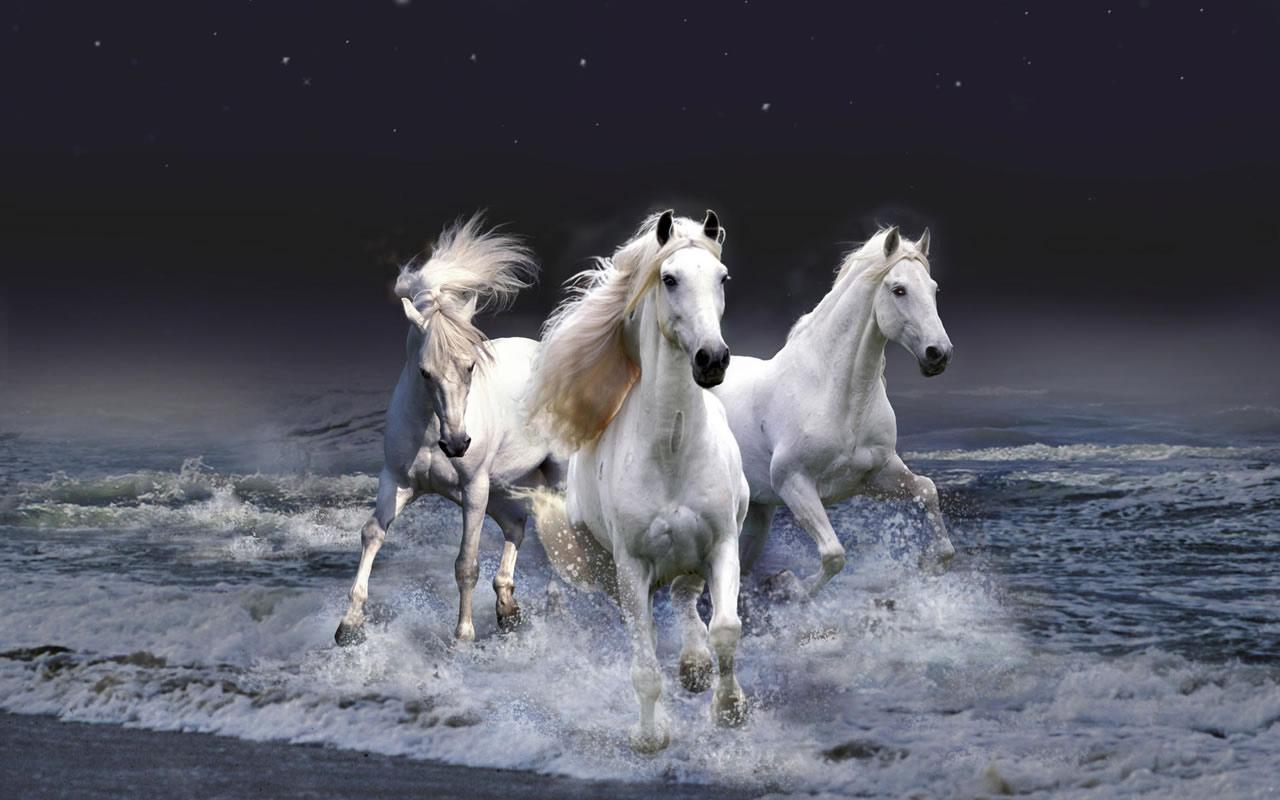Beautiful   Wallpaper Horse Assassin'S Creed - beautiful_white_horses_wallpaper_x  Snapshot_238291.jpg