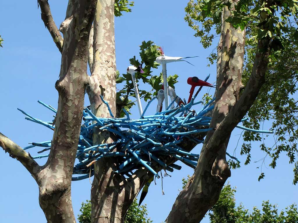 Cico cico on the trees, piazza Mazzini, Livotno