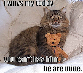 very funny cats,funny cat jokes,funny cat captions,funny cats pictures ...