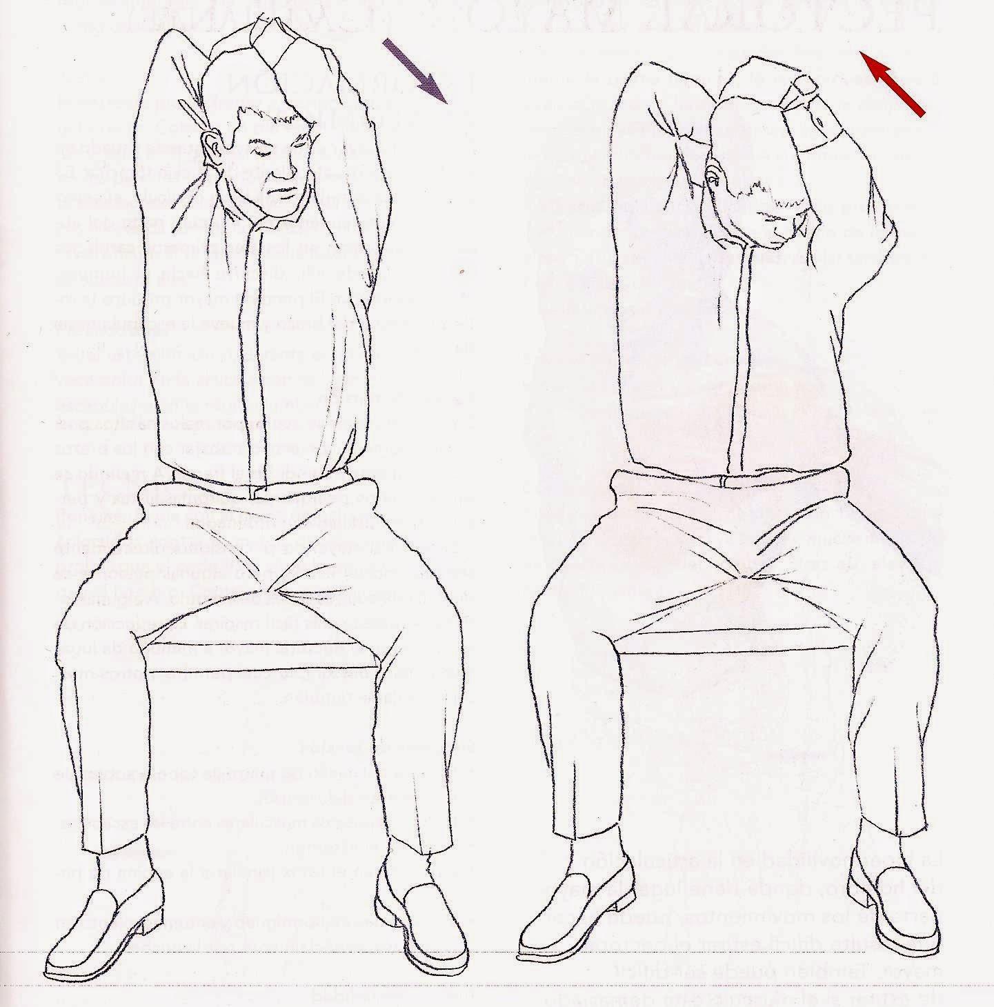 Pilates Marisa Rodriguez: Autoestiramiento del músculo elevador de ...