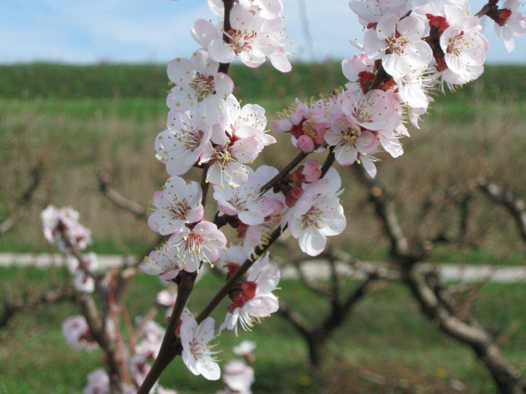 L 39 orto di giada primavera piovosa for Piante da frutto che resistono al freddo