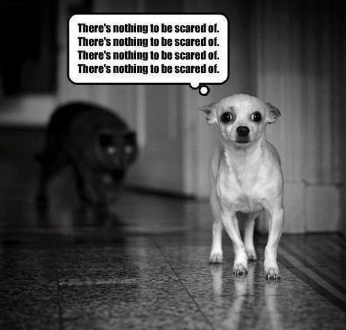 Droge Humor Grappige Afbeeldingen Chihuahua