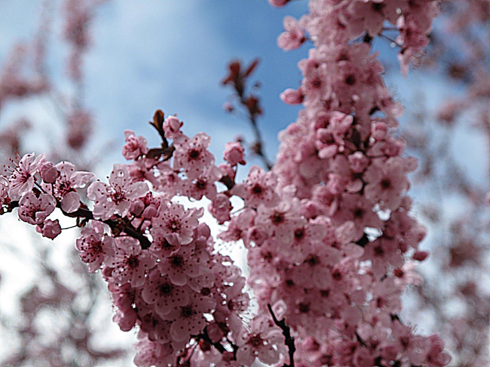 Spring Pinks Purple Chocolat Home