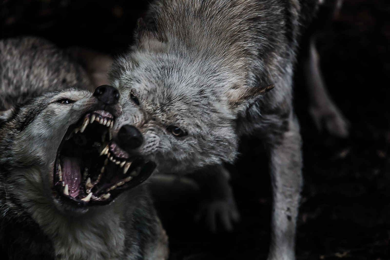 Emmaus Sheffield: The wolf you feed is the one that wins!