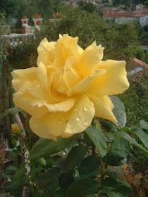 http://duendepoeta.blogspot.com.es/