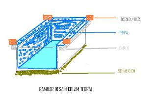 contoh desain kolam lele terpal