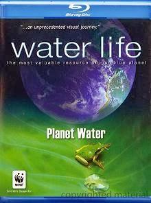 Cuộc Sống Dưới Nước - Water Life
