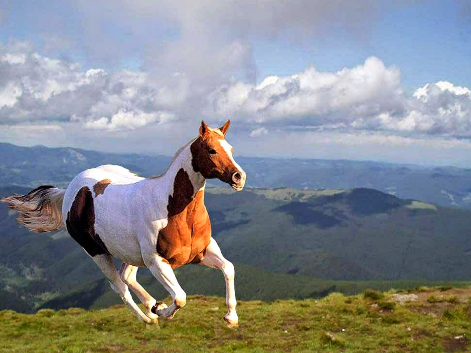 wallpapers horse wallpapers