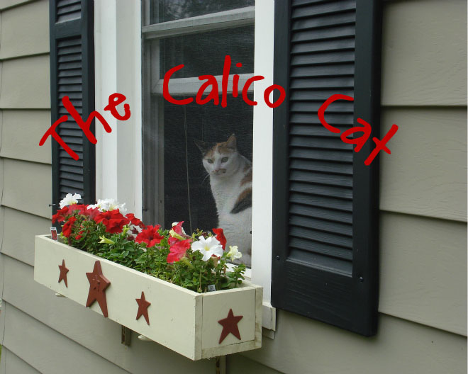 The Calico Cat....
