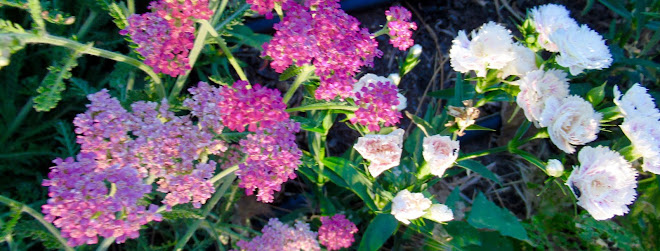 Pink Yarrow and carnations