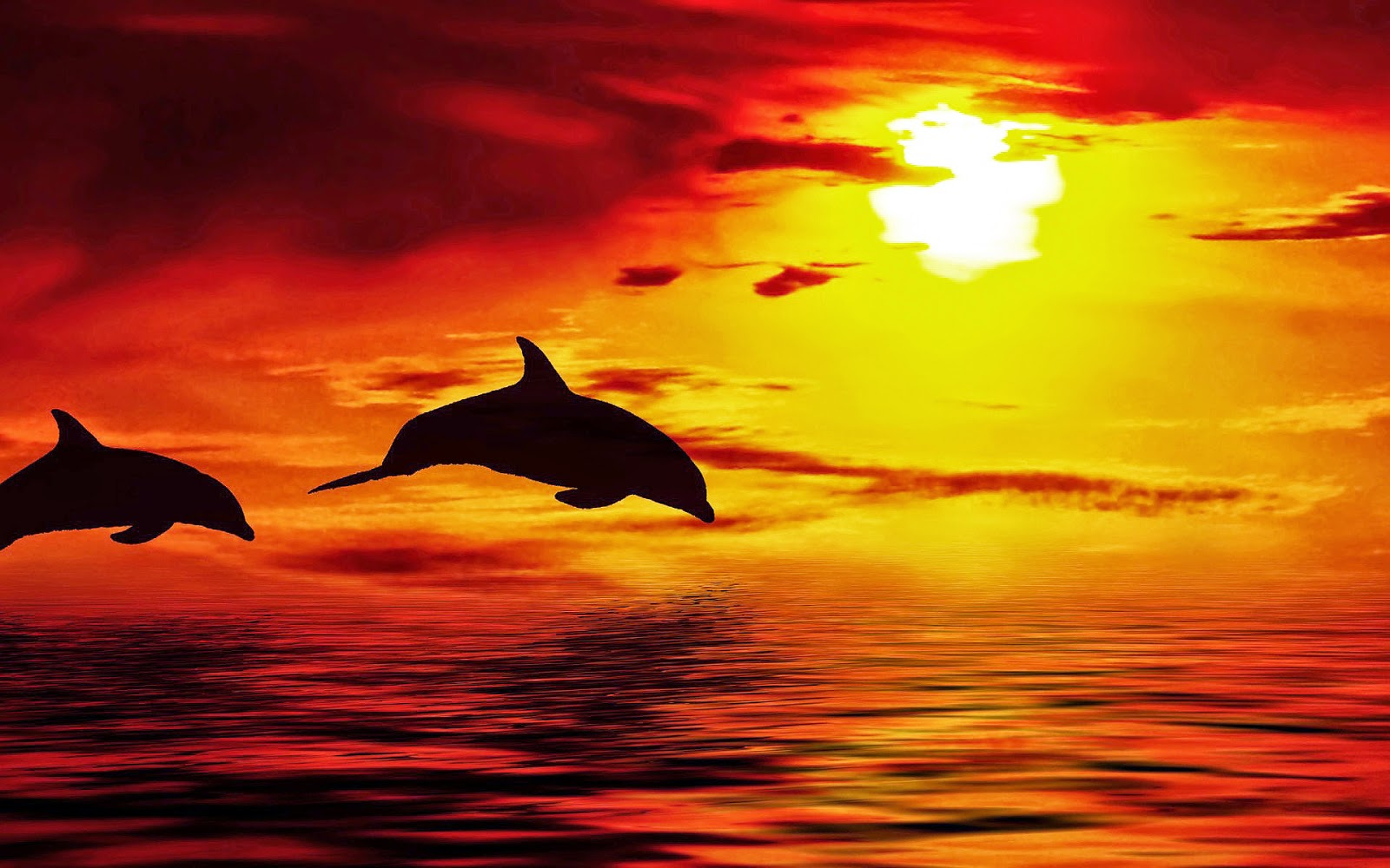 Foto dolfijnen tijdens zonsondergang