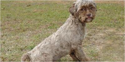 Anjing Unik Miliki Wajah Layaknya Wajah Manusia