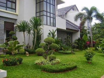 jenis tanaman yang cocok ditanam di halaman rumah