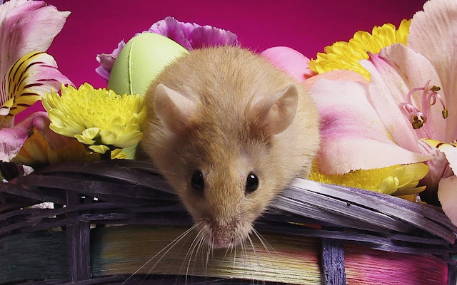 Best Jungle Life mouse, basket of flowers, mouse wallpaper