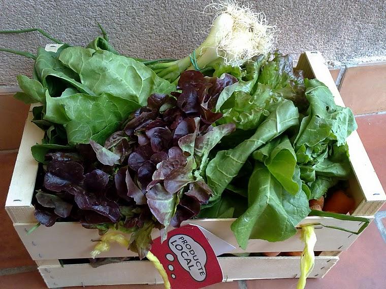 Cistelles verdura i fruita ecològica de la finca Es Vinyol, Manacor