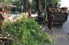 Jasa Penebangan Pohon Di Jakarta Murah