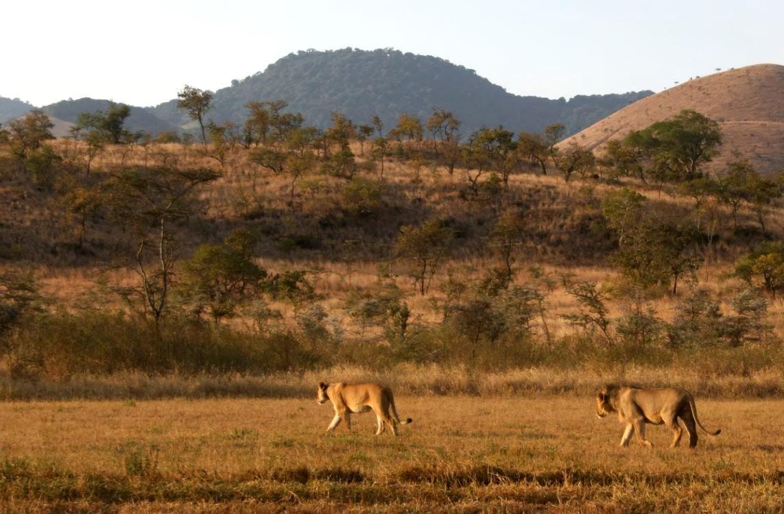 Maasai Wilderness Conservation Trust: Conservation Program Update ...
