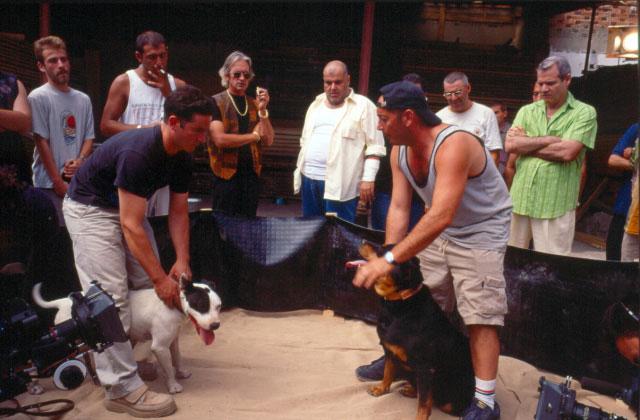 foto del rodaje de la pelea de perros