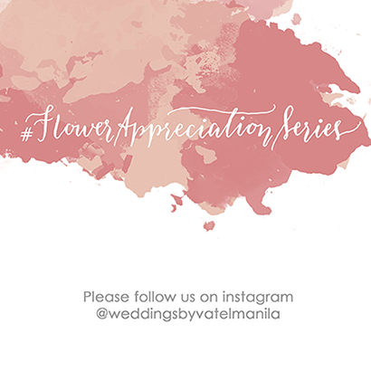 OUR ADVOCACY: FLORAL APPRECIATION. FOLLOW US!