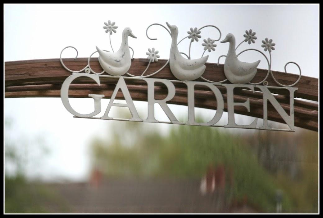 Plantes du Jardin'Ophile du temps