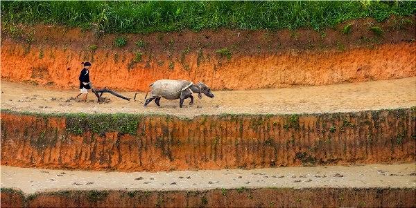 Trekking Sapa Vietnam 2