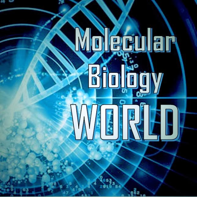 Molecular Biology World