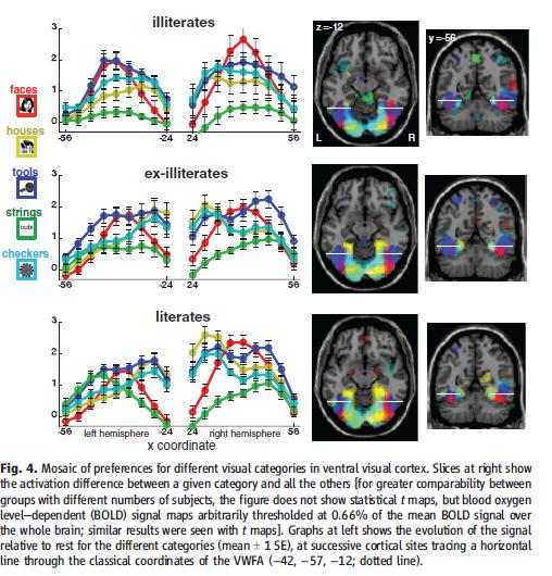 Dehaene 2010 aires cérébrales de la lecture en fonction du niveau de lecture