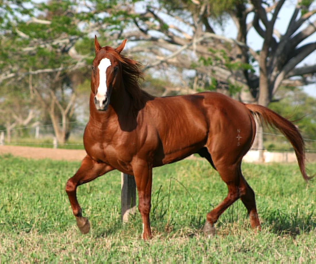 Conozcamos de caballos: Colores y marcas
