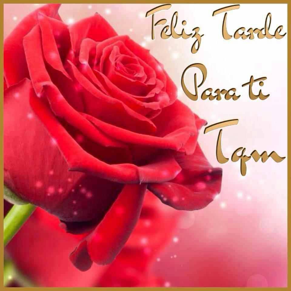 rosa buenas tardes