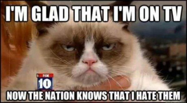 13 Figur Terpopuler Tahun 2012 - Grumpy Cat