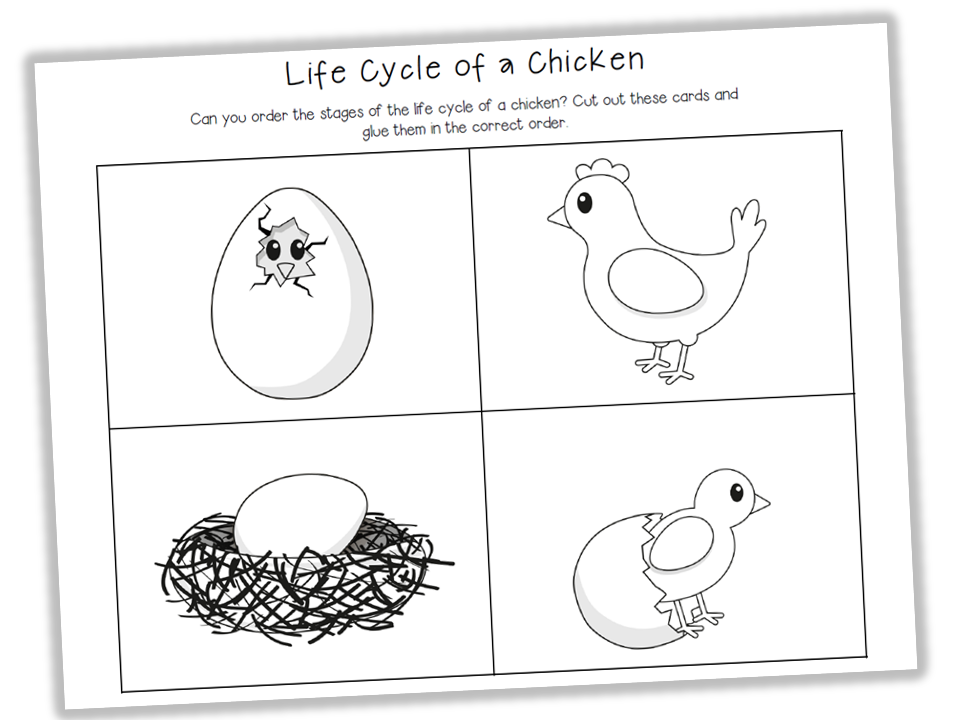 Image Gallery of Life Cycle Of A Chicken Worksheet – Chicken Life Cycle Worksheet
