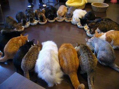 gatos comiendo en circulo