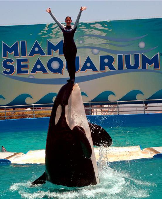 South Florida Guy: Miami Seaquarium