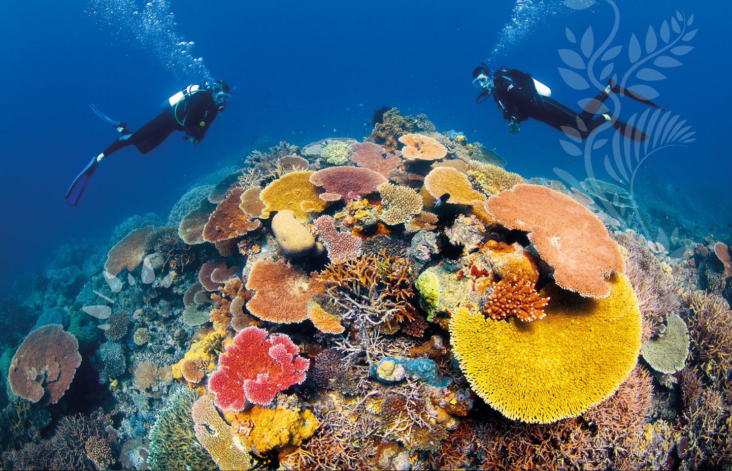Great barrier reef austrialia luxury places - Best place to dive the great barrier reef ...