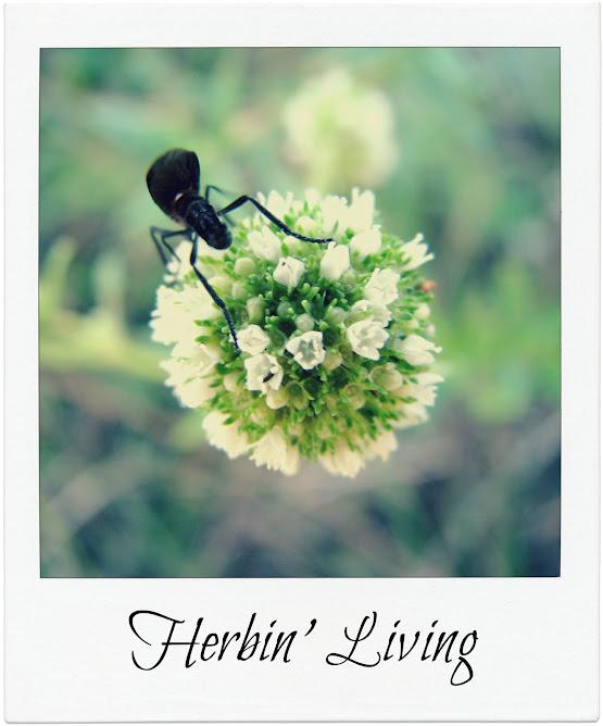 Herbin Living